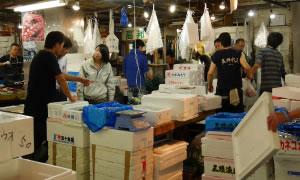 旬のものや築地市場ならではの鮮魚も豊富
