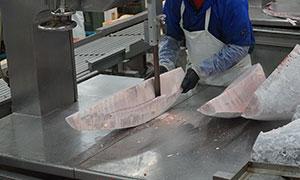 加工現場を視察。職人さんが大きなマグロを部位ごとに切り分けていきます。