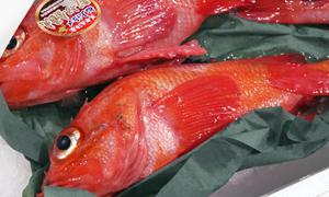 キンキや八角、カジカなどなど、あまり瀬戸内ではなじみのないお魚も、そこかしこに。