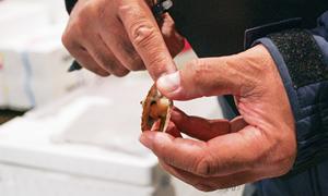 すみずみまで見せてもらいながら、じっくりと魚介の特長を勉強。
