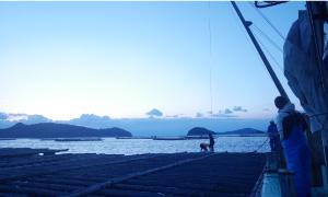 このあたりは3つの海流がぶつかる海域なので牡蠣のエサとなる植物プランクトンが豊富で、滋味深い牡蠣に育つんだとか。